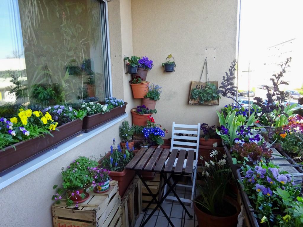 мини-сад-на-маленьком-балконе-1024x768