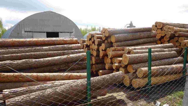 Sell-spruce-pine-birch-oak-beech-larch